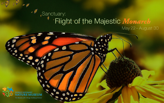 Migration of the Monarch Butterfly Exhibit